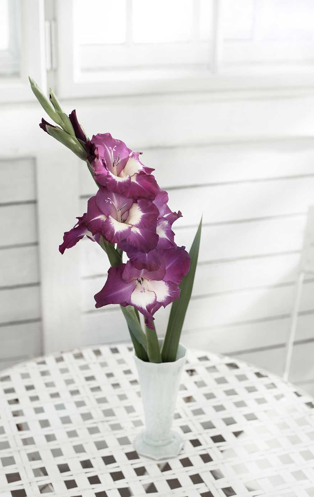 Weisse Vase mit Blumen